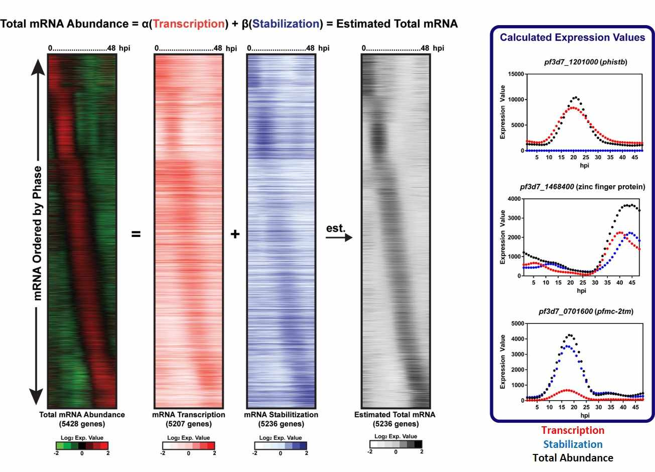 Bioinformatic analysis reveals the contribution of transcription and stabilization to mRNA abundance